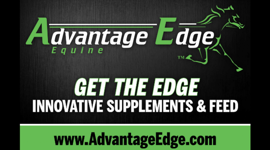 Advantage Edge At Black Book Standardbred Sale